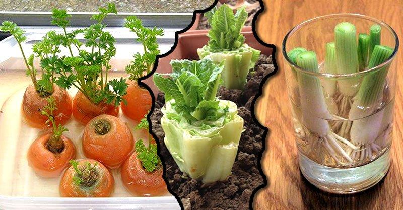 กินผักอย่าทิ้งราก