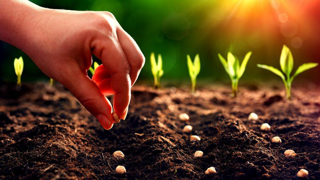 การเพาะเมล็ด การขยายพันธุ์พืช แบบเกษตรอินทรีย์
