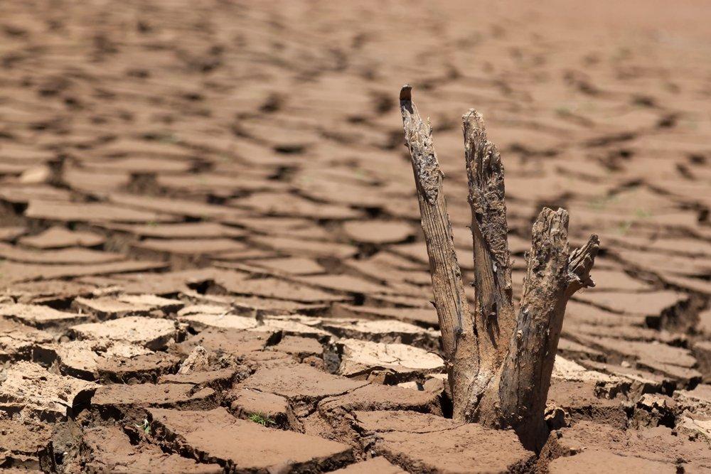 พื้นที่แห้งแล้ง เหมาะกับการปลูกพืชทนแล้ง