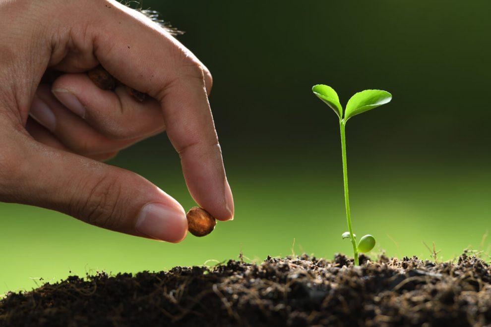 แนะนำกรรมวิธีการเพาะเมล็ดแบบไร้ดิน แบบต้นทุนต่ำ