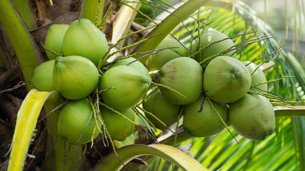 ผลไม้ที่มีตลอดปี มีกินไปตลอดปี