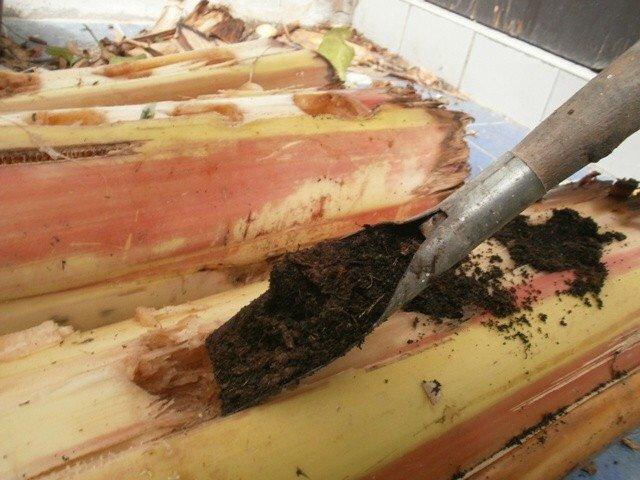การปลูกผักบนต้นกล้วย ความลับที่ไม่มีใครบอก