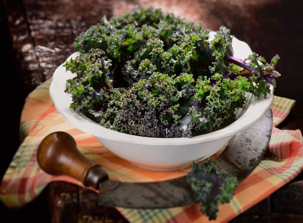 สายพันธุ์ผักเคล Red Russian Kale