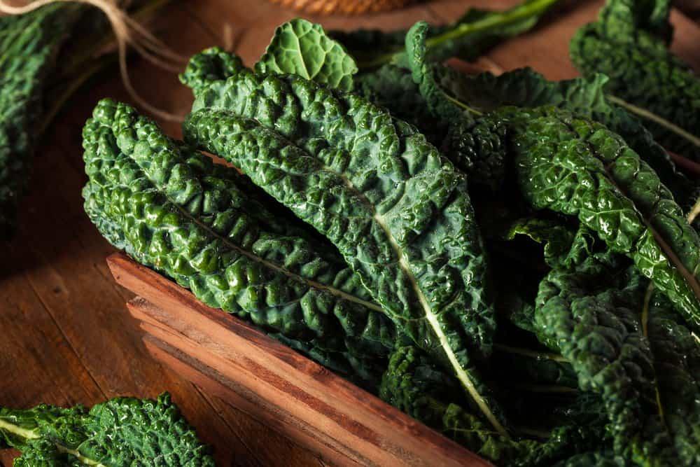 สายพันธุ์ผักเคล Lacinato kale