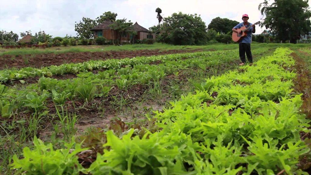 สวนลุงไกร วังน้ำเขียว ศิลปินปราชญ์ชาวบ้านด้านผักปลอดสารพิษ