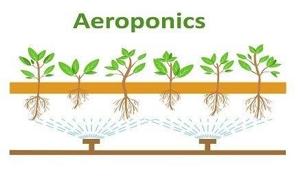 ผักแอโรโพนิกส์ Aeroponics วิธีปลูก ดูแล และสร้างรายได้