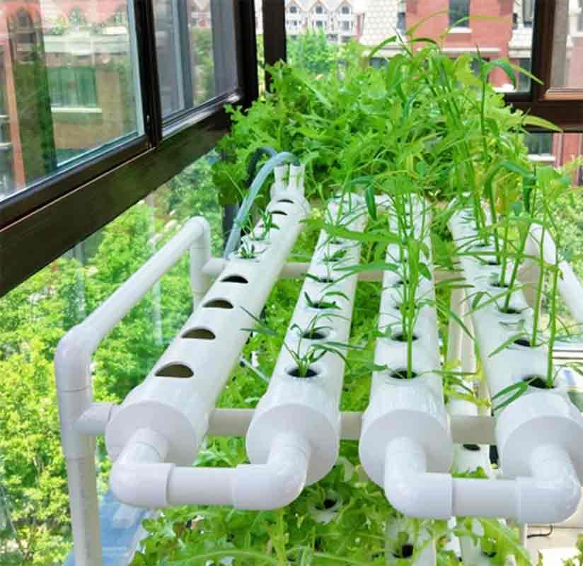 การปลูกพืชโดยไม่ใช้ดิน จากคำว่า ไฮโดรโปนิกส์ หรือ Hydroponics