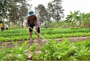 เริ่มต้นการปลูกผักอินทรีย์ ทำอย่างไรถึงแก้จนได้