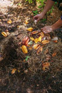 การทำปุ๋ยหมักชีวภาพจากเศษอาหารและใบไม้