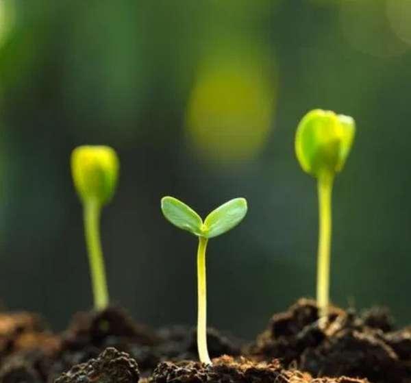 ธาตุอาหารสำหรับพืช Micronutrient