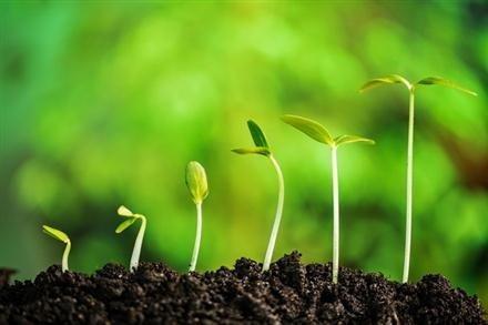 อาการของพืชที่ขาดธาตุไนโตรเจน