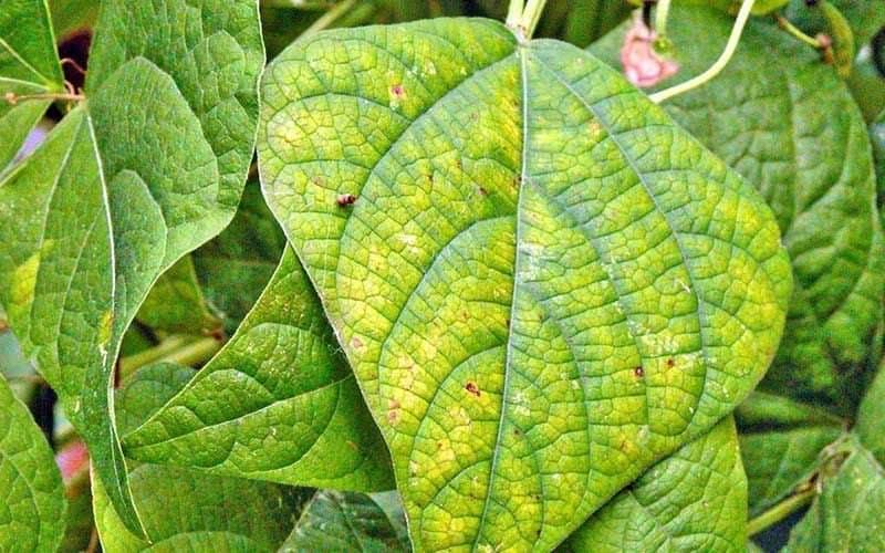อาการขาดธาตุอาหารของต้นพืช และสารอาหารที่ต้องการ