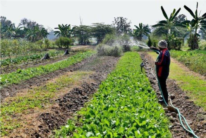 ตัวอย่างวิถีเกษตรทฤษฎีใหม่ ที่ทำได้จริง
