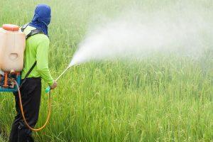 การใช้สารทดแทนเคมีในการทำเกษตรอินทรีย์