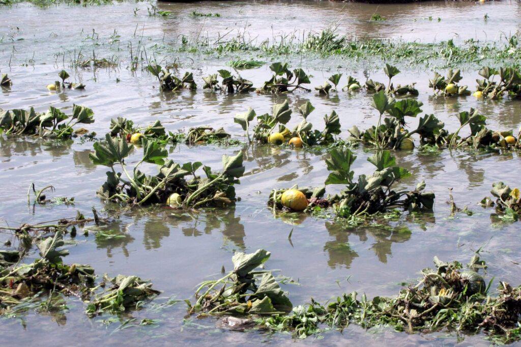 ปลูกอะไรดีในพื้นที่น้ำท่วมบ่อย แล้วได้ผลผลิตสูง