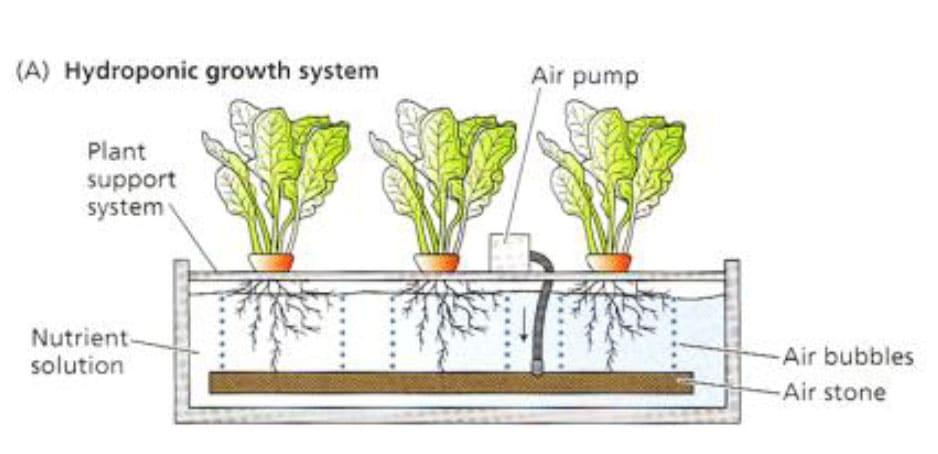 ระบบไฮโดรโปนิกส์แบบปลูกในน้ำ