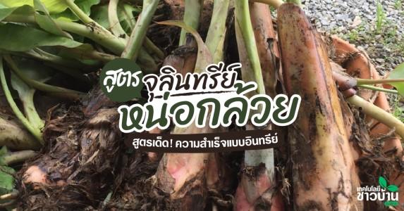 การใช้จุลินทรีย์หน่อกล้วยกับการทำเกษตรอินทรีย์