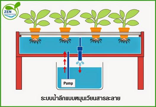 การปลูกพืชไฮโดรแบบ DFT น้ำลึก