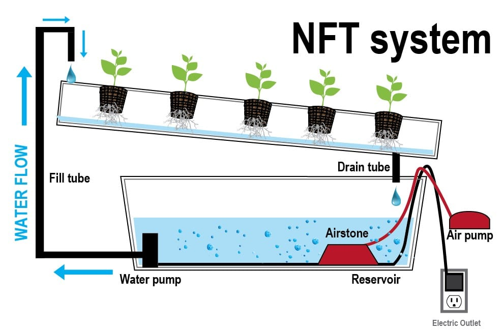 ระบบไฮโดรโปนิกส์แบบ NFT