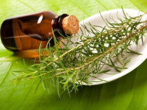 น้ำมันทีทรี หรือ Tea Tree Oil จากต้นทีทรี
