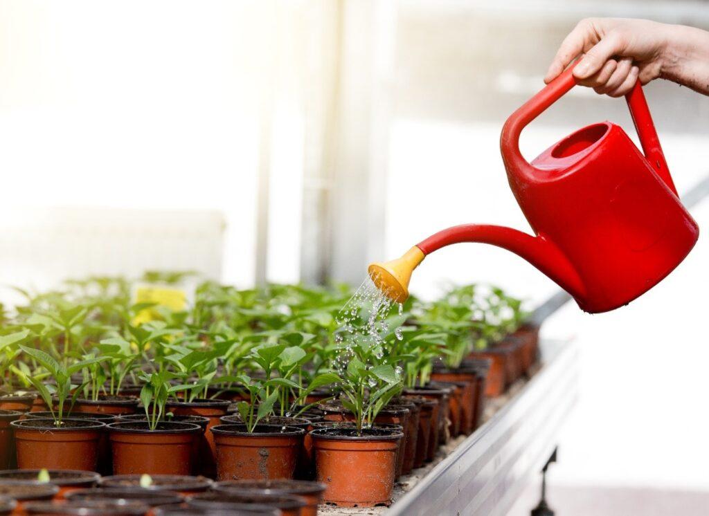 เลือกซื้อบัวรดน้ำ อุปกรณ์สำหรับทำสวนหย่อมขนาดเล็ก
