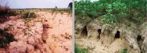 สภาพดินปนทราย ปลูกพืชอะไรถึงจะดี