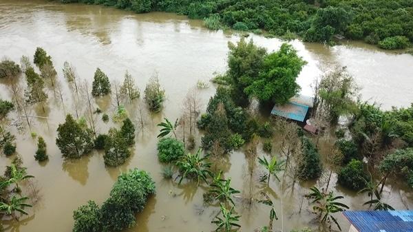 การดูแลต้นไม้และพืช หลังน้ำท่วมลด